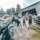 Schüler stehen am Alpakagehege
