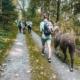 Schüler mit Alpakas und lamas an der Leine